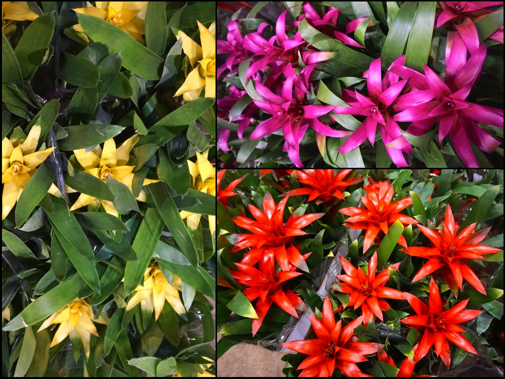 flors5